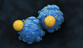 Cancer Cell attacked by Killer T-Lymphocyte-1006935602