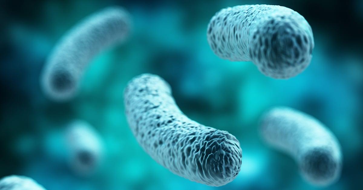 Lactobacillus Probiotic