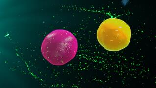 Flow cytometry assay validation assists in situations requiring GLP/GCP compliance