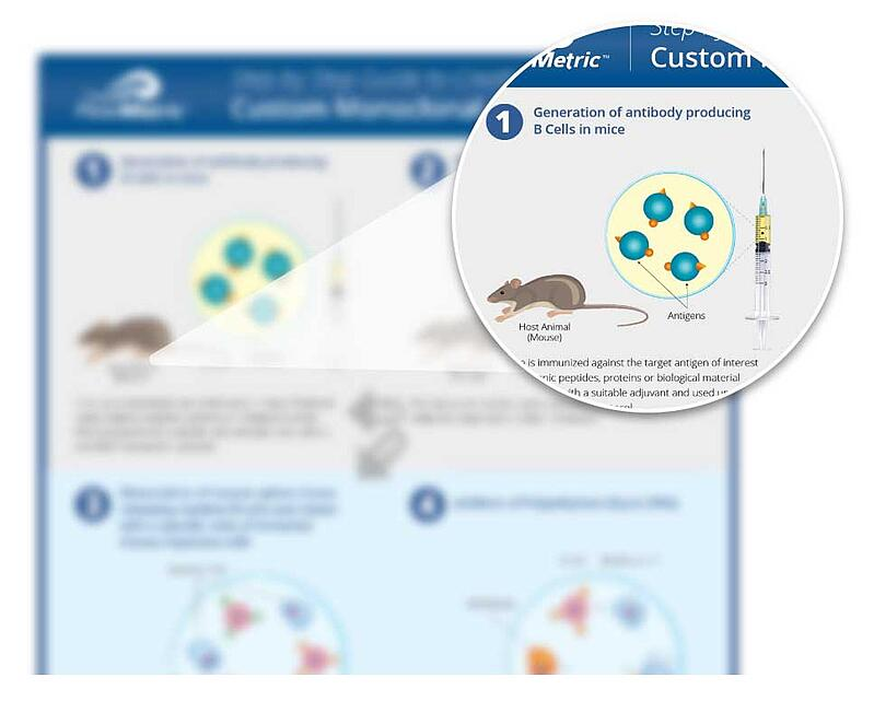 Custom Monoclonal Antibodies Infographic